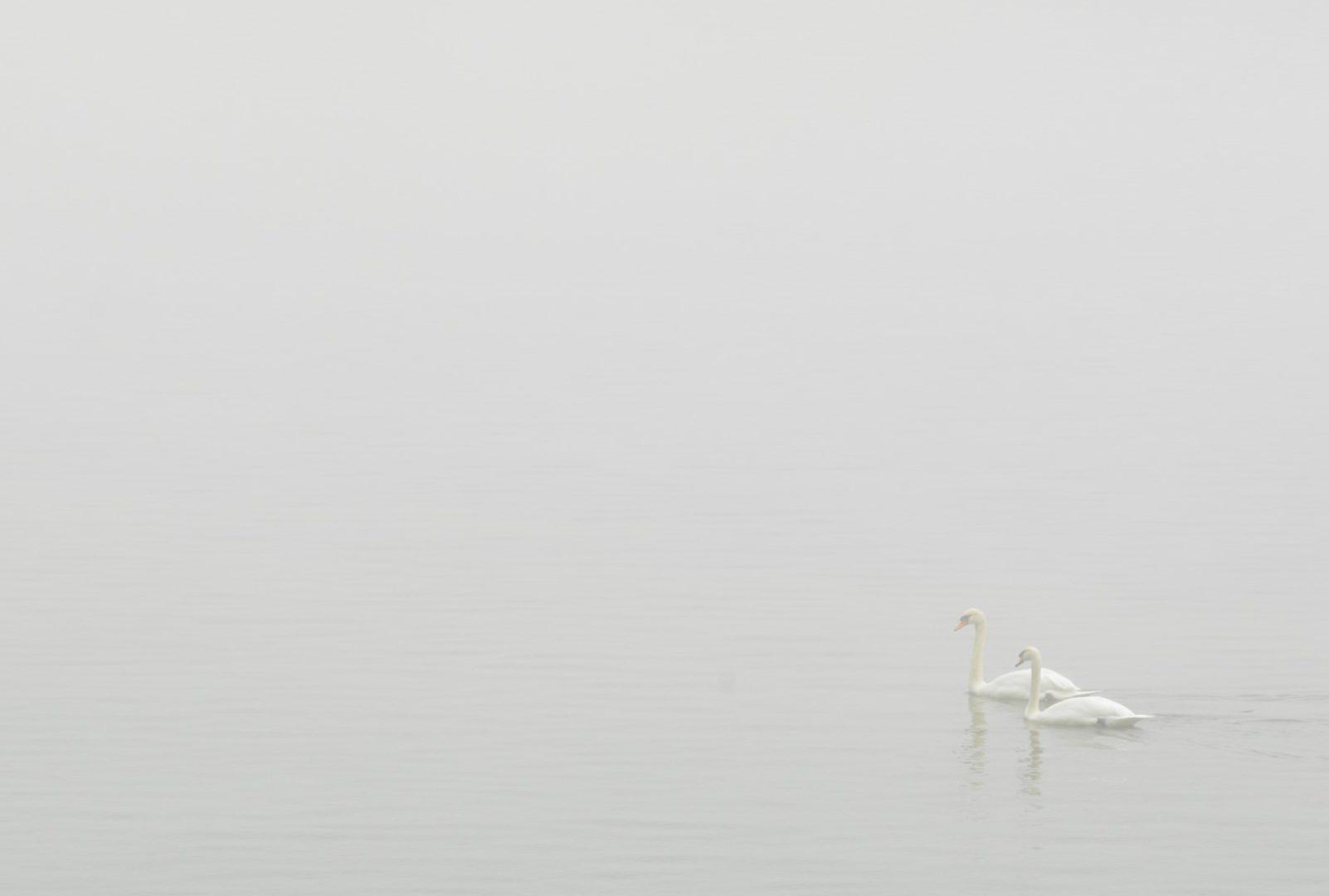 Foto: Michael Klein – Zweisamkeit